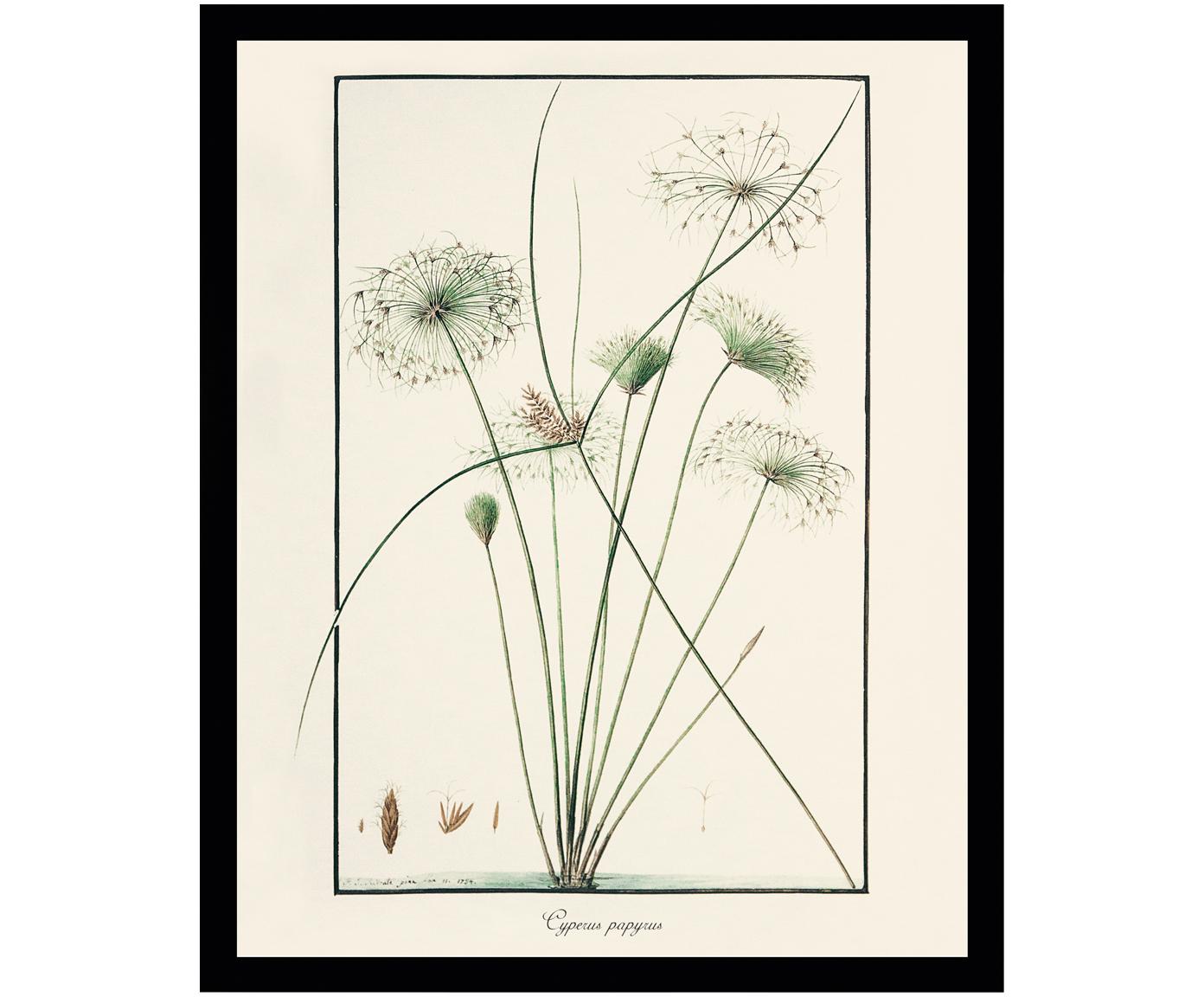 Obraz Druk Cyfrowy Plant Painting Iii 30x40 7224203332 Oficjalne
