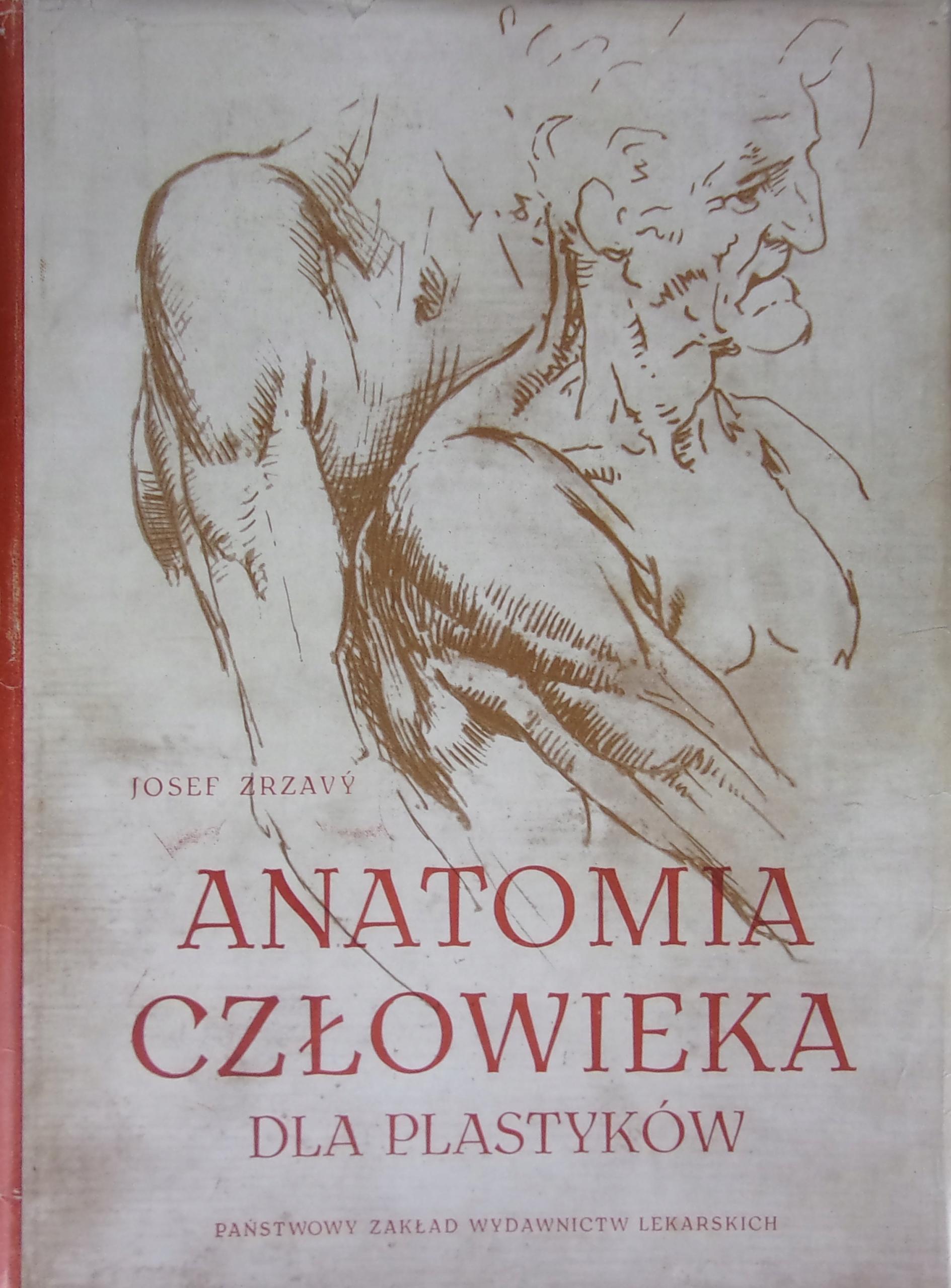Anatomia Człowieka Dla Plastyków 7527284568 Oficjalne