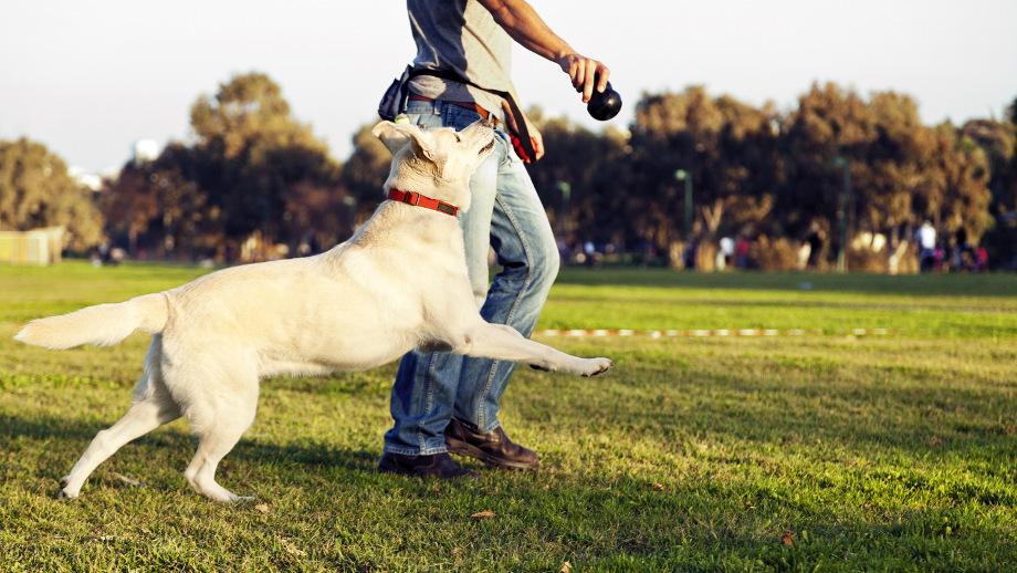 Jak samodzielnie nauczyć psa sztuczek?