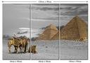 Obraz Widok Egipt Pustynia Piramidy Wielbłądy Arab