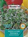 Gorczyca nasiona na kiełki 20g PLANTICO