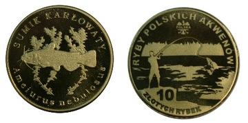 Sumik Карликовый - 10 золотых рыбы - Рыбы Польских доставка товаров из Польши и Allegro на русском