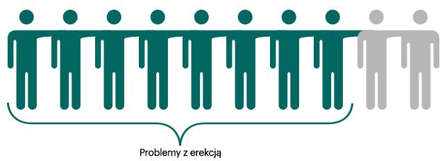 Erekcja (fizjologia)